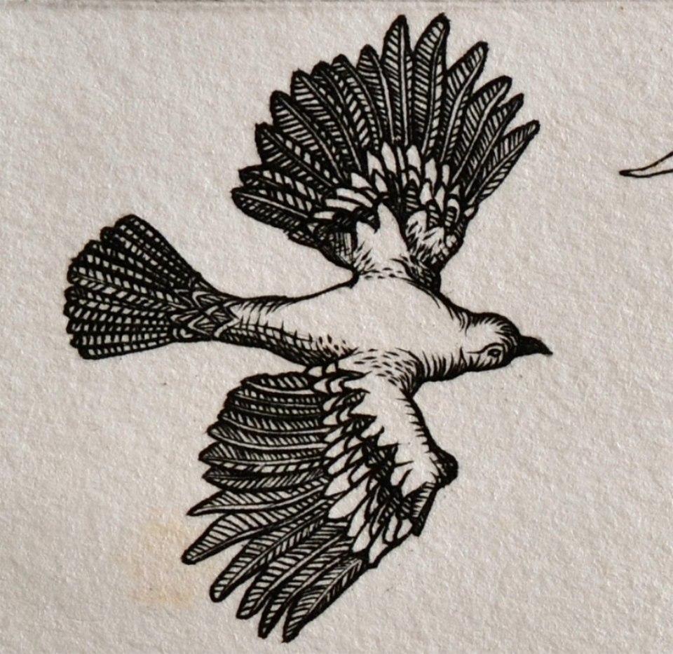 dove detail