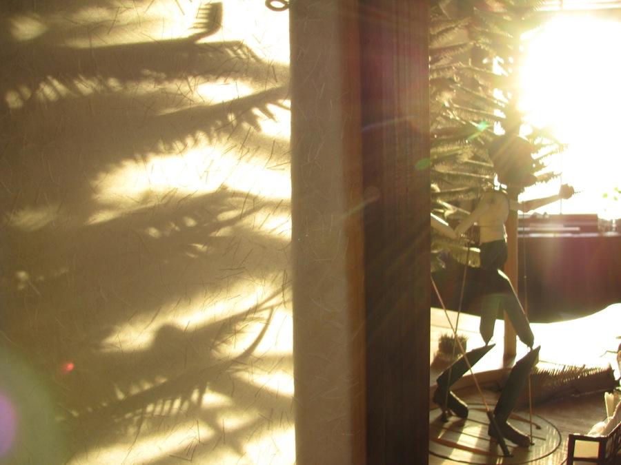 Laceroot Sun