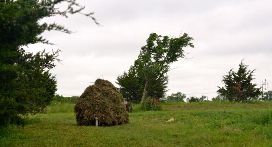 alfalfa stack