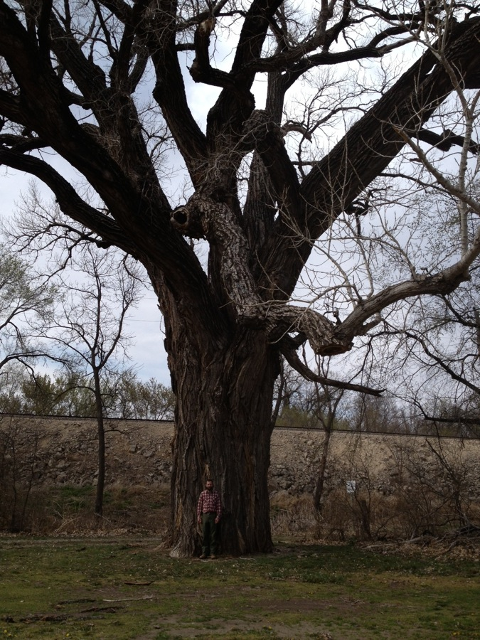 The second biggest cottonwood in Kansas stood by as a witness to the shedding of blood