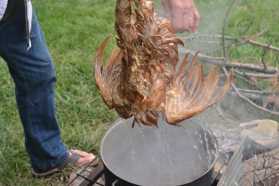 butchering chickens a u2019 la tom sawyer
