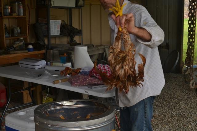 chicken butchering06