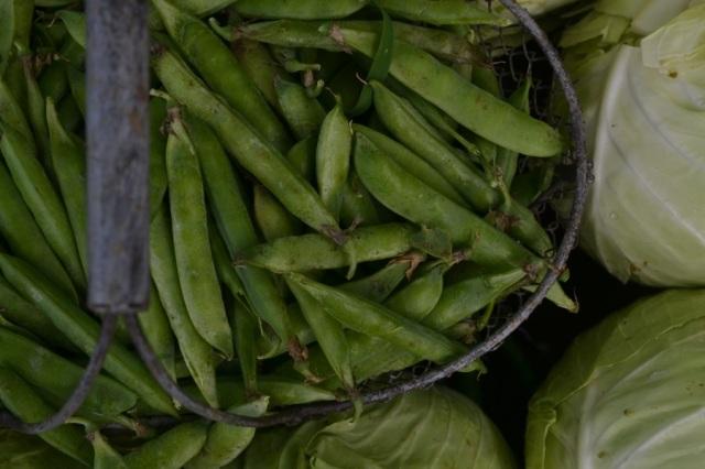 summer harvest02