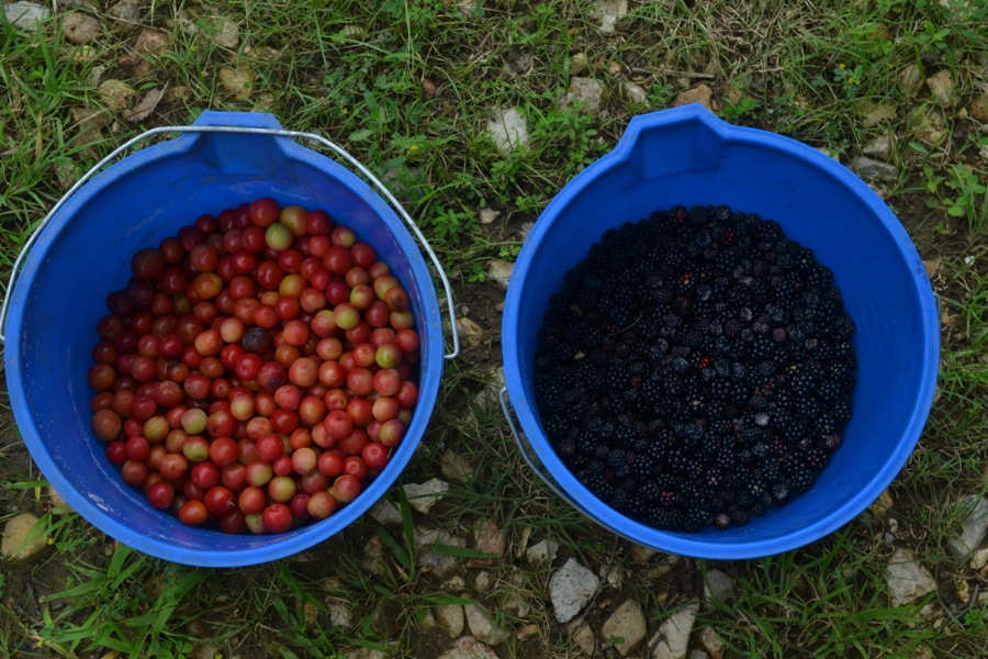 summer harvest05