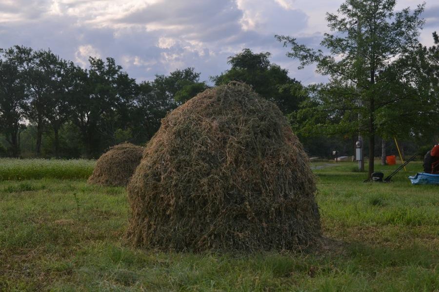 summer harvest06