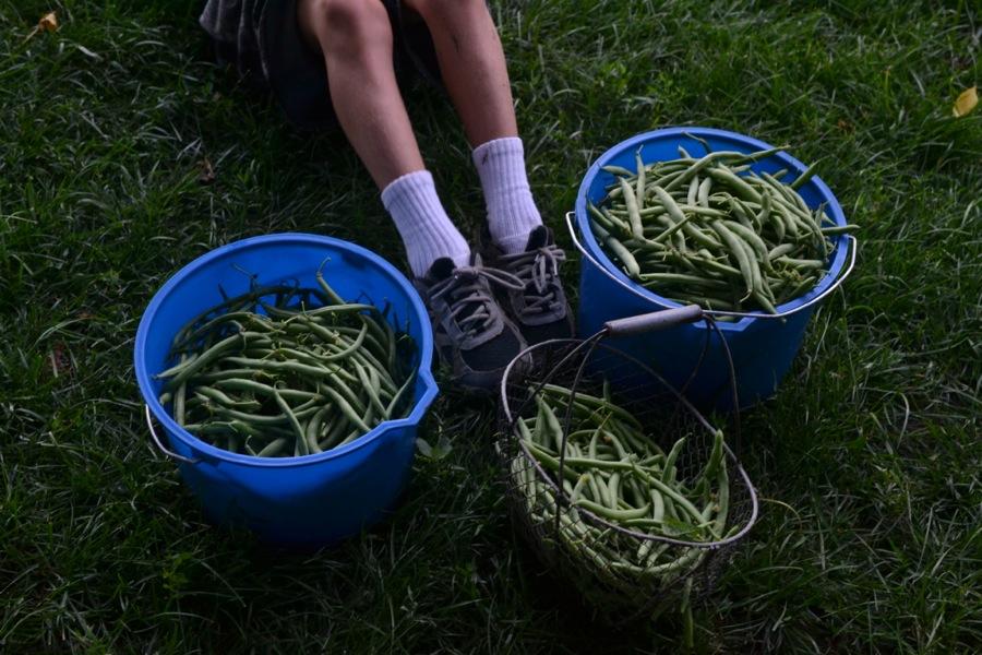 summer harvest13
