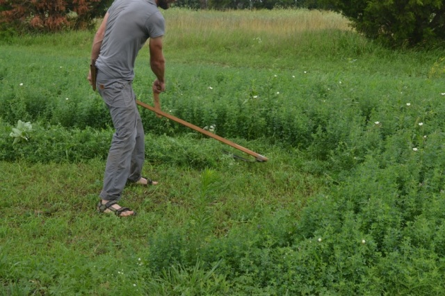 summer harvest15