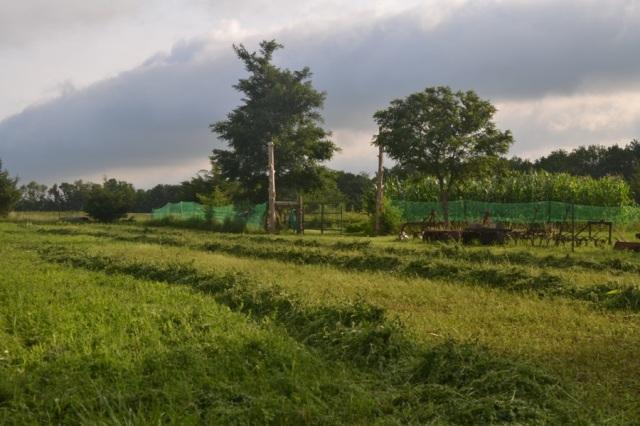 summer harvest17