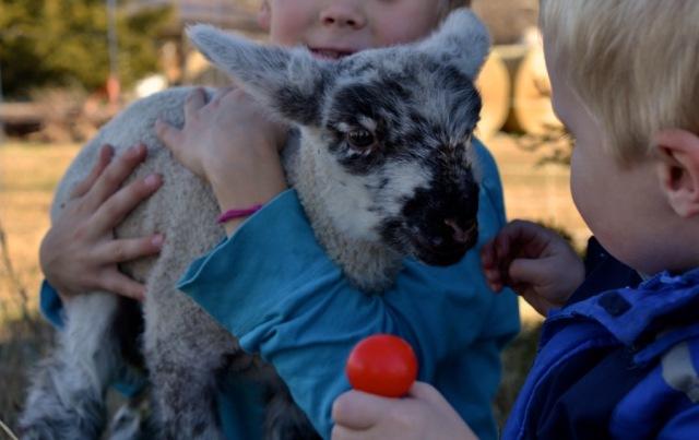 November Lambs23